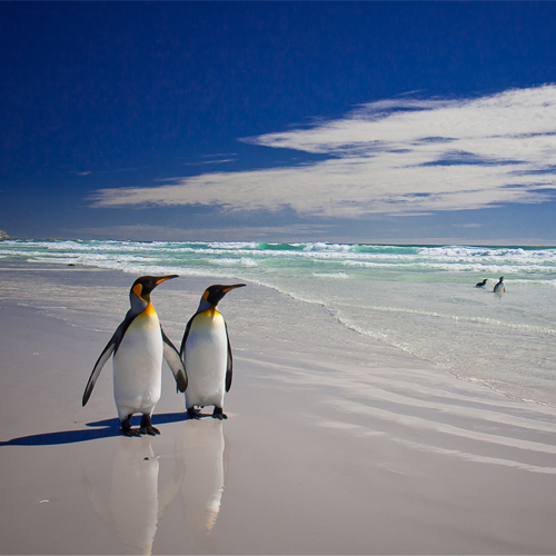 Penguins walking along beach