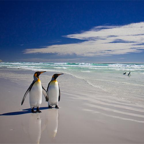 Penguins walking along beach